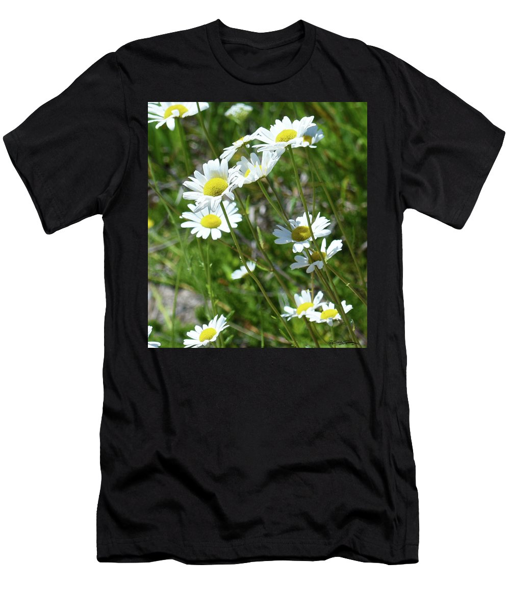 Daisy Men's T-Shirt (Athletic Fit) featuring the photograph Daisies Popping Up Everywhere by Sally Sperry