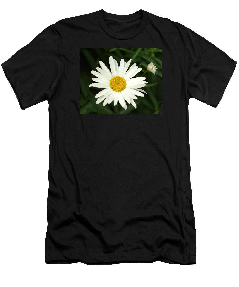 Daisy Men's T-Shirt (Athletic Fit) featuring the photograph Daisy Days by Carol Sweetwood