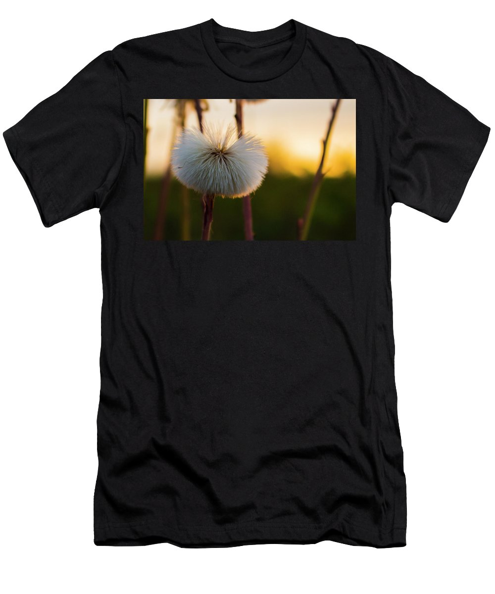 Dandelion Men's T-Shirt (Athletic Fit) featuring the photograph Dandelion At Sunset by Simon Cook