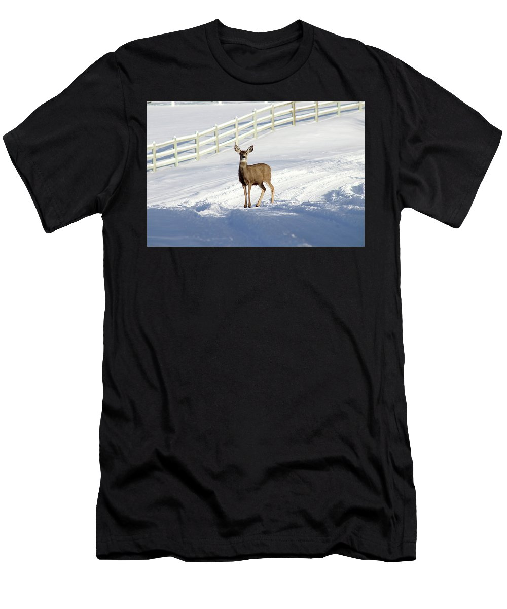Animal Men's T-Shirt (Athletic Fit) featuring the photograph Deer In Snow Covered Road by Travers Morgan