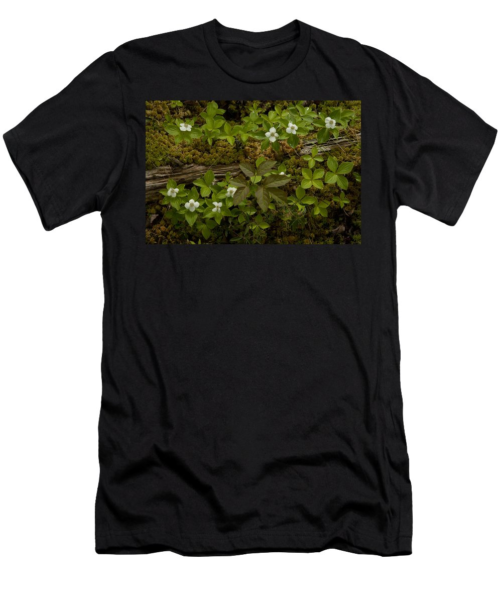 Wildflowers Men's T-Shirt (Athletic Fit) featuring the photograph Dew Dropped Spring Bunchberries by Irwin Barrett