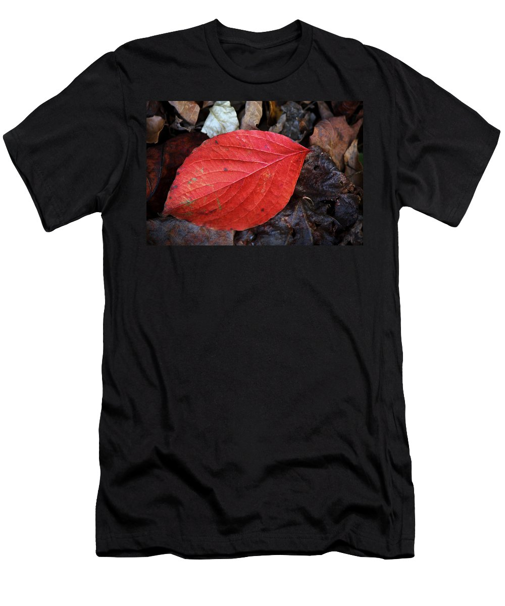 Dogwood Men's T-Shirt (Athletic Fit) featuring the photograph Dogwood Leaf by Teresa Mucha
