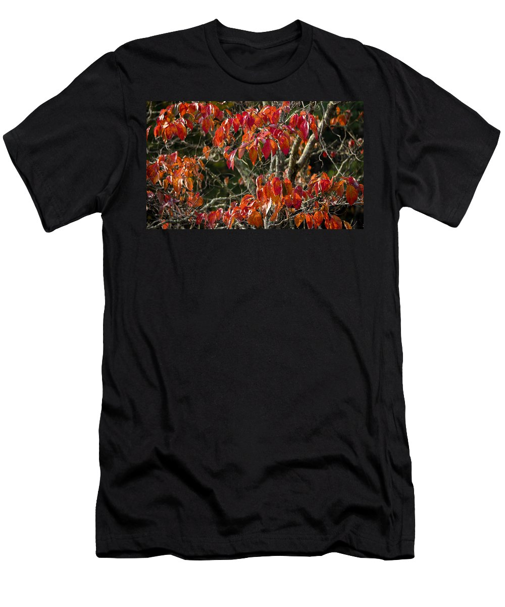 Dogwood Men's T-Shirt (Athletic Fit) featuring the photograph Dogwood Tree by Teresa Mucha