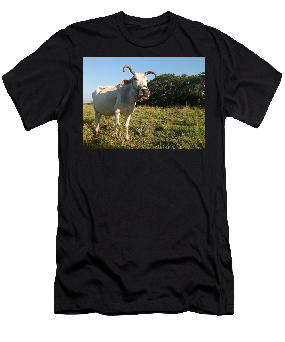 Domestic Men's T-Shirt (Athletic Fit) featuring the photograph Domestic Animal 02 by Kalyan Sinha