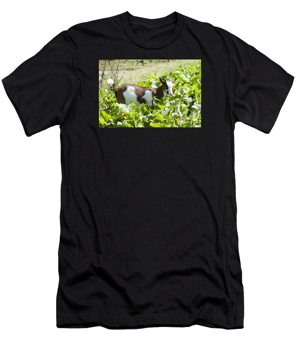 Domestic Men's T-Shirt (Athletic Fit) featuring the photograph Domestic Pygmy Goat by Ilan Rosen