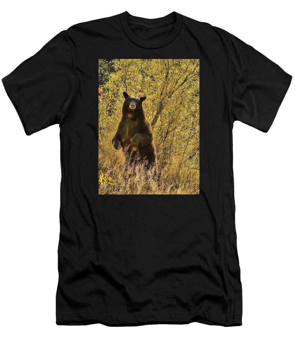 Bear Men's T-Shirt (Athletic Fit) featuring the photograph Don't Look At Me That Way by Dennis Bolton