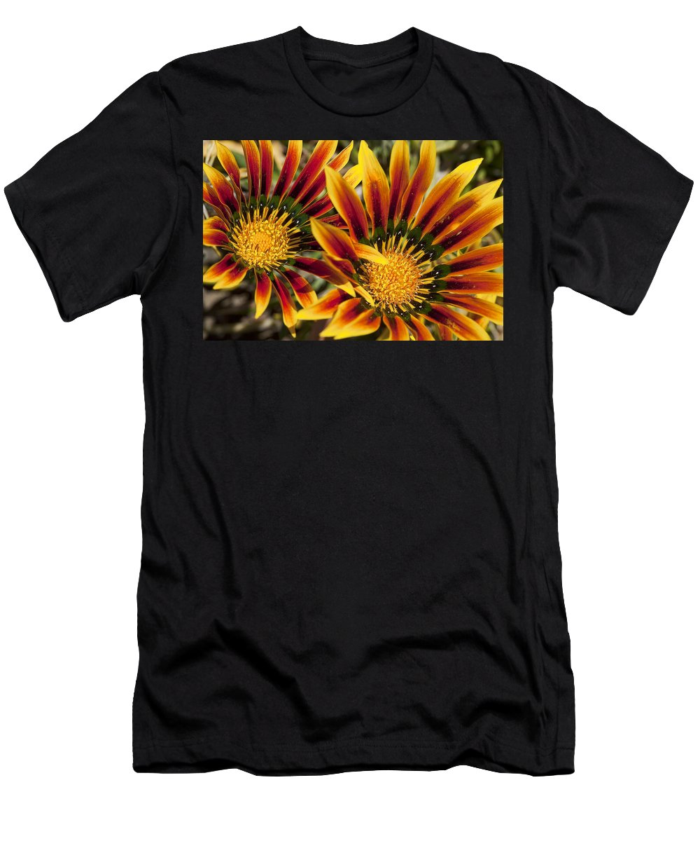 Flowers Men's T-Shirt (Athletic Fit) featuring the photograph Dueling Gerberas by Kelley King