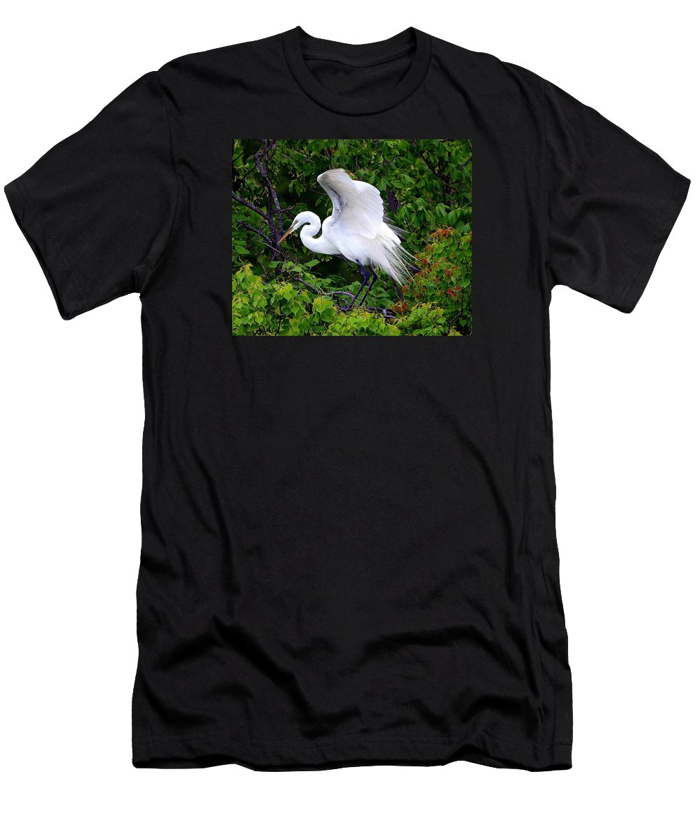 Great Egret; Egret; White Egret; Chinese Tallow; Chinese Tallow Tree; Ardea Alba; Triadica Sebifera; Wings; Stretching; Aquatic Bird; Aquatic; Water Fowl; Waders; White Rock Lake; Dallas Texas; Tree Above The Lower Spillway Steps Men's T-Shirt (Athletic Fit) featuring the photograph Early Color by Kala King