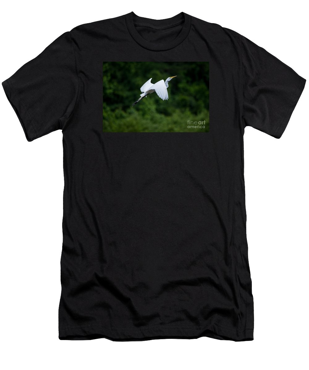 Bird Men's T-Shirt (Athletic Fit) featuring the photograph Egret Rising II by Torrance Pollard
