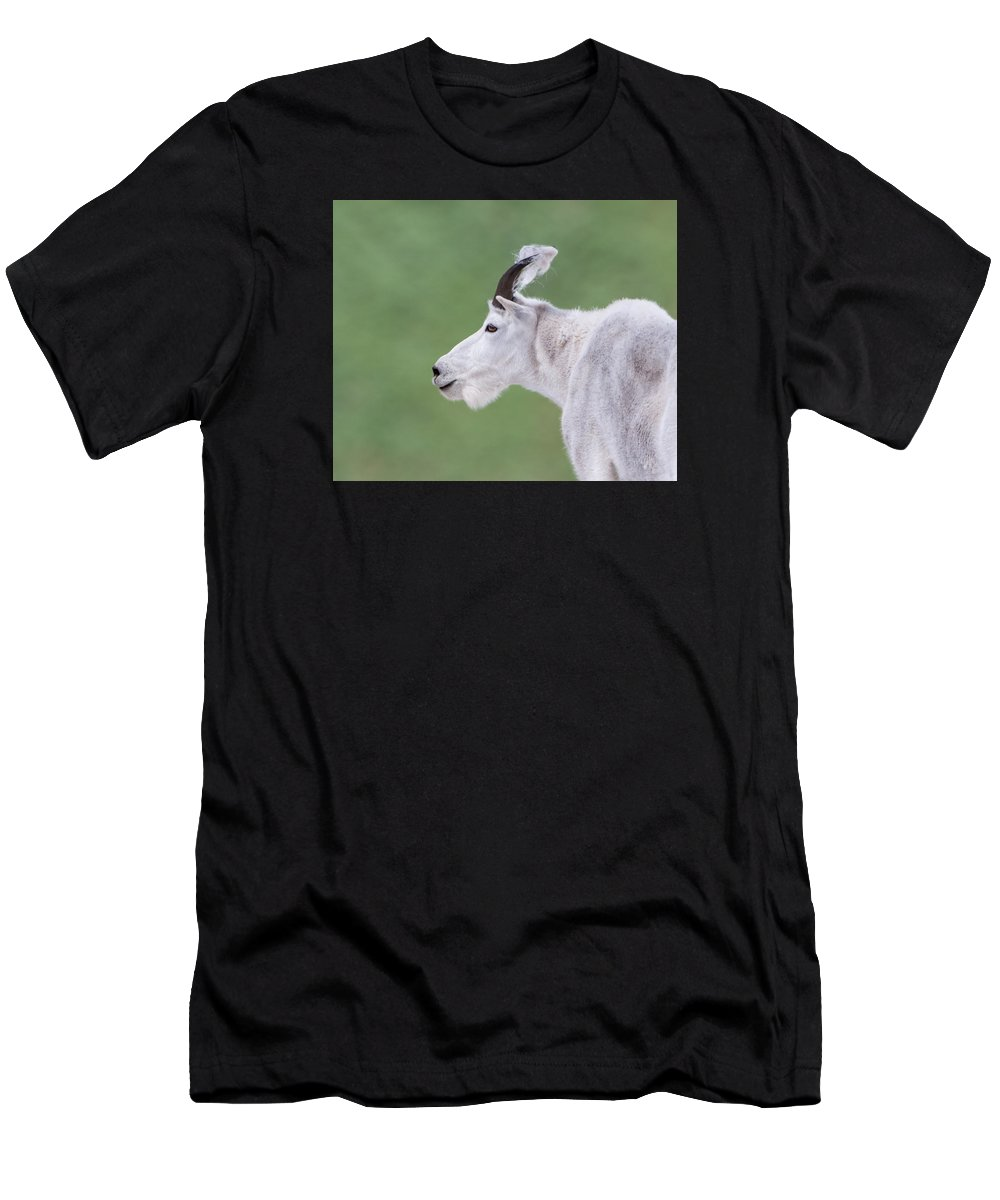 Mountain Goat Men's T-Shirt (Athletic Fit) featuring the photograph Emerald Billy by Kent Keller