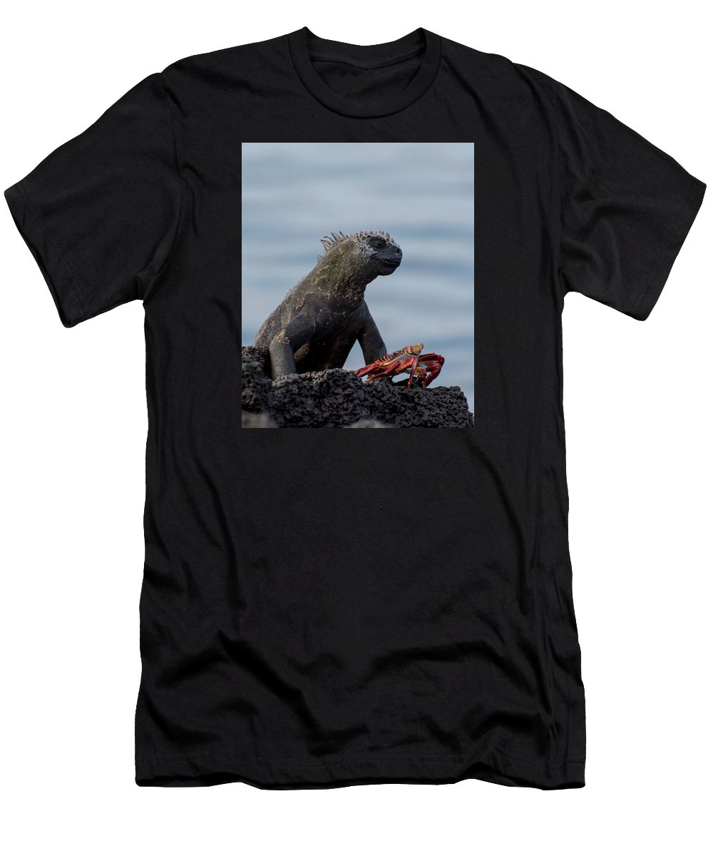 Animal Men's T-Shirt (Athletic Fit) featuring the photograph Enjoying The View by Bob Jensen