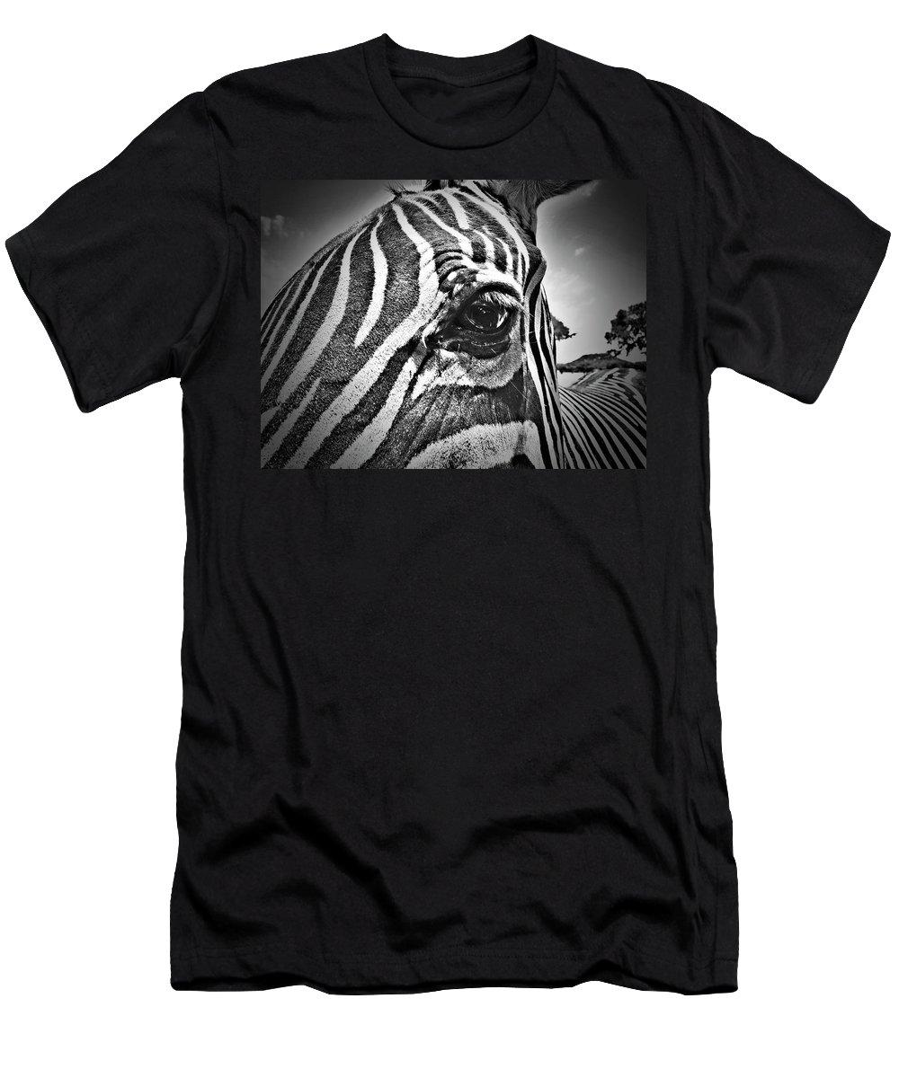 Zebra Men's T-Shirt (Athletic Fit) featuring the photograph Eye Level by Douglas Barnard