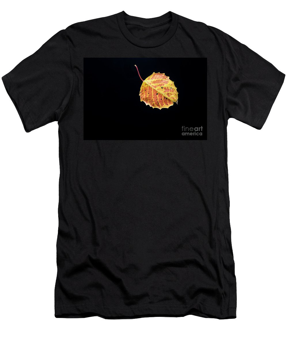 Minnesota Men's T-Shirt (Athletic Fit) featuring the photograph Falling Birch Leaf by David Parker