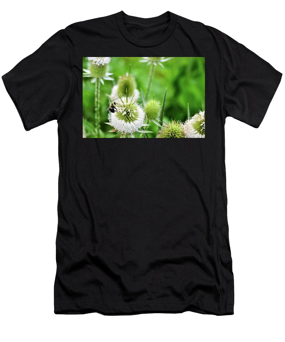 Thistles In Bloom Men's T-Shirt (Athletic Fit) featuring the photograph Feasting Bee by Soni Macy