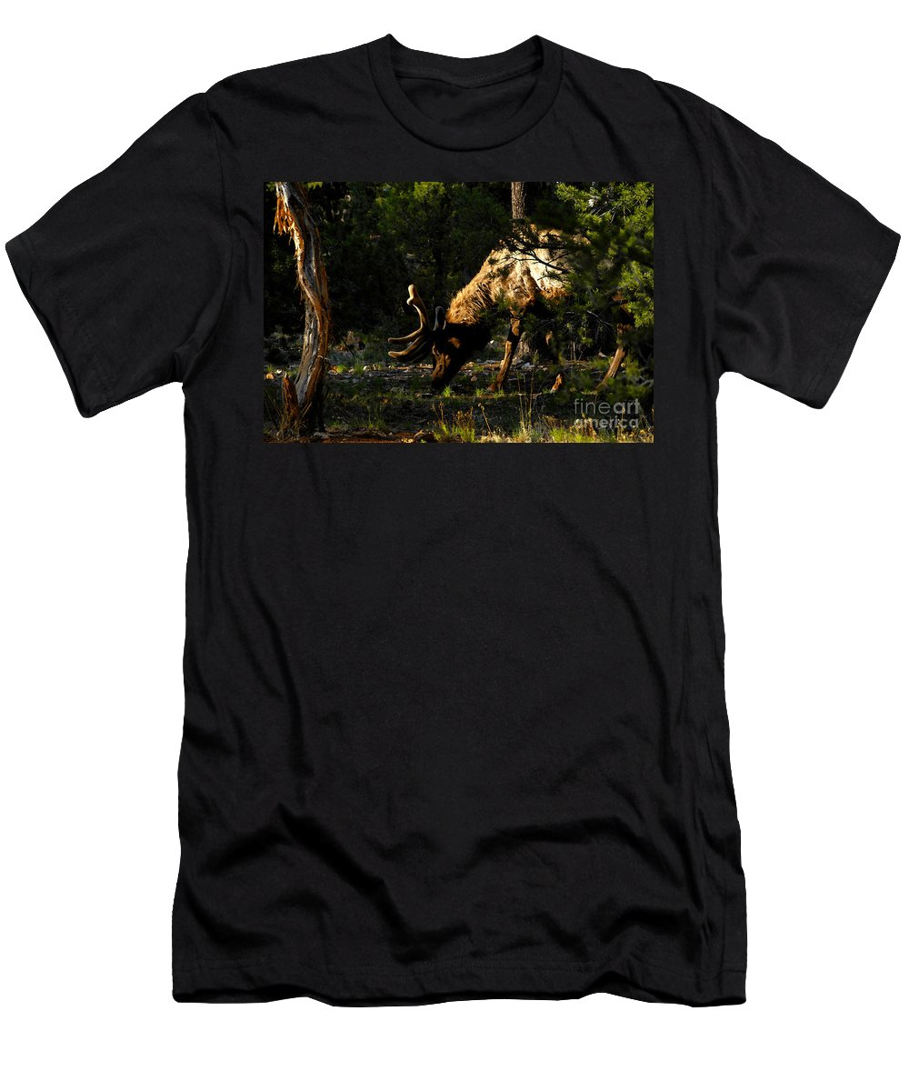Elk Men's T-Shirt (Athletic Fit) featuring the painting Feeding Elk by David Lee Thompson