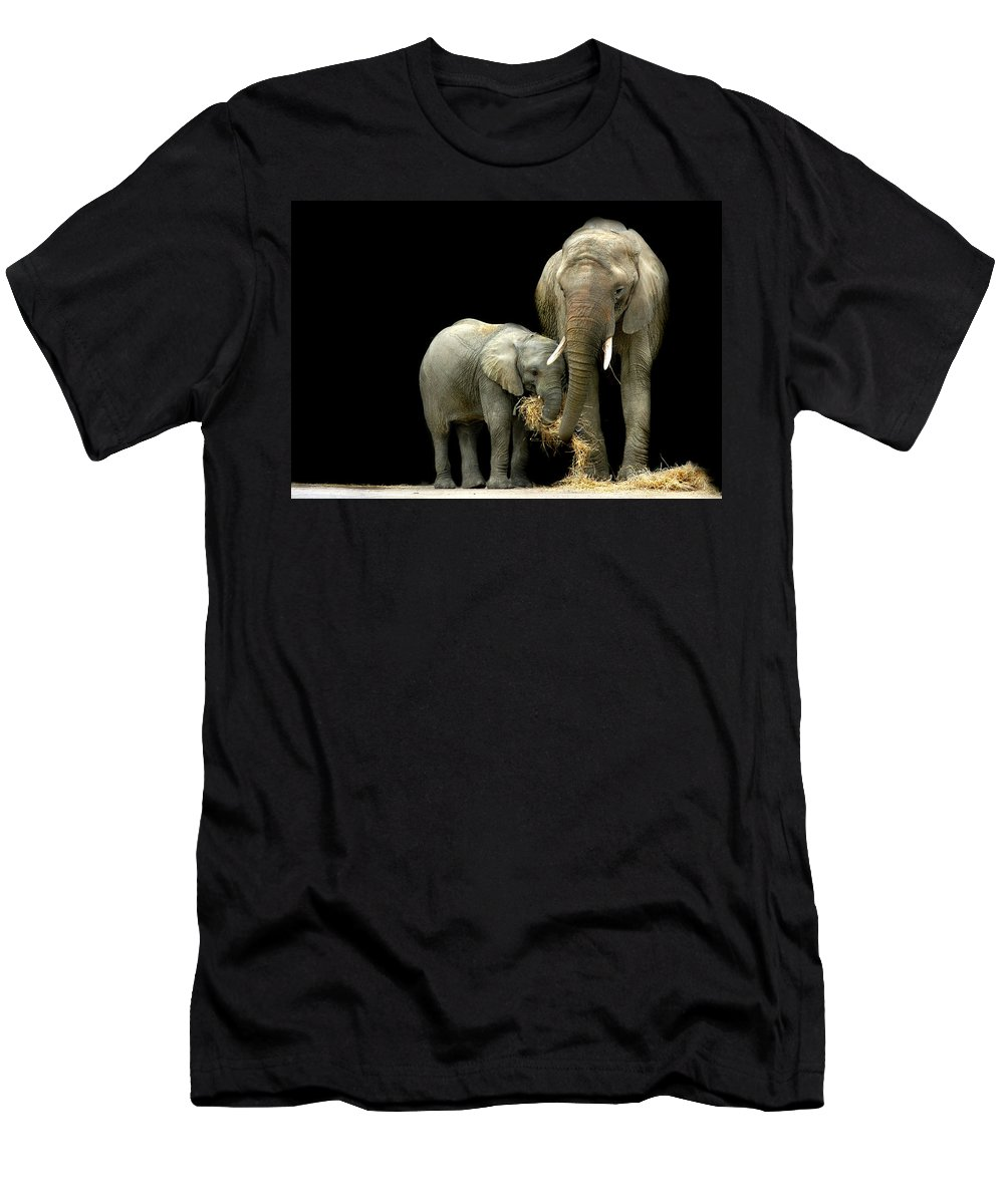 Elephant Men's T-Shirt (Athletic Fit) featuring the photograph Feeding Time by Stephie Butler