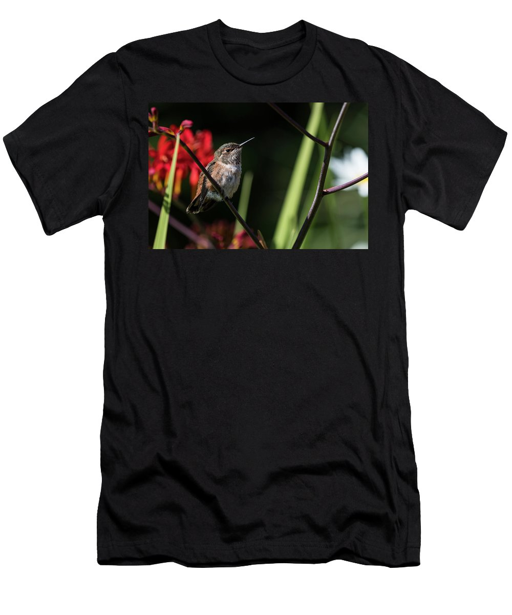 Animals Men's T-Shirt (Athletic Fit) featuring the photograph Female Rufous Hummingbird by Robert Potts