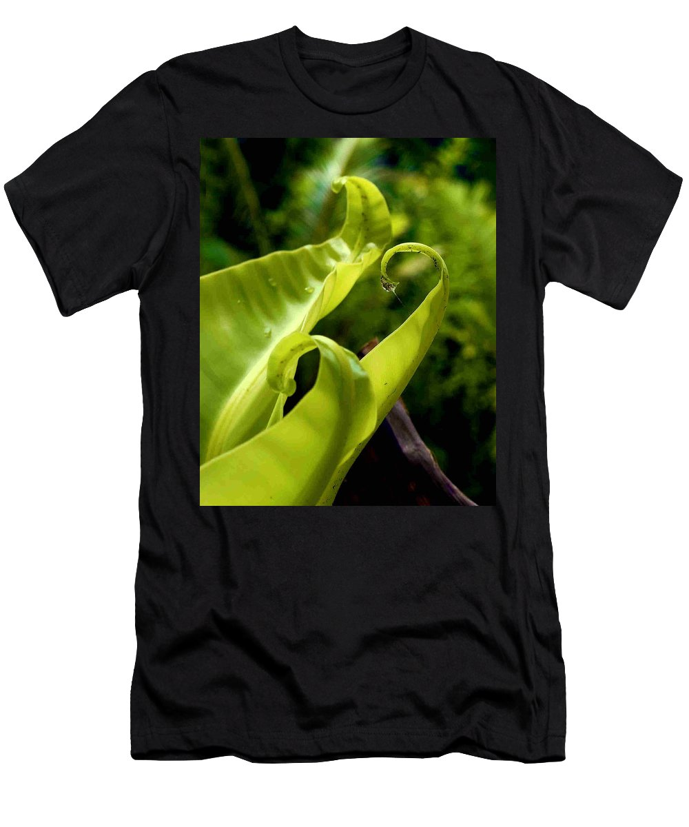 Fern Leaves Men's T-Shirt (Athletic Fit) featuring the photograph Fern Leaves by Dragica Micki Fortuna