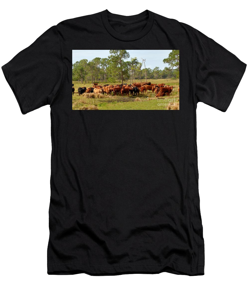 Florida Cracker Cows Men's T-Shirt (Athletic Fit) featuring the photograph Florida Cracker Cows #1 by Teresa A and Preston S Cole Photography