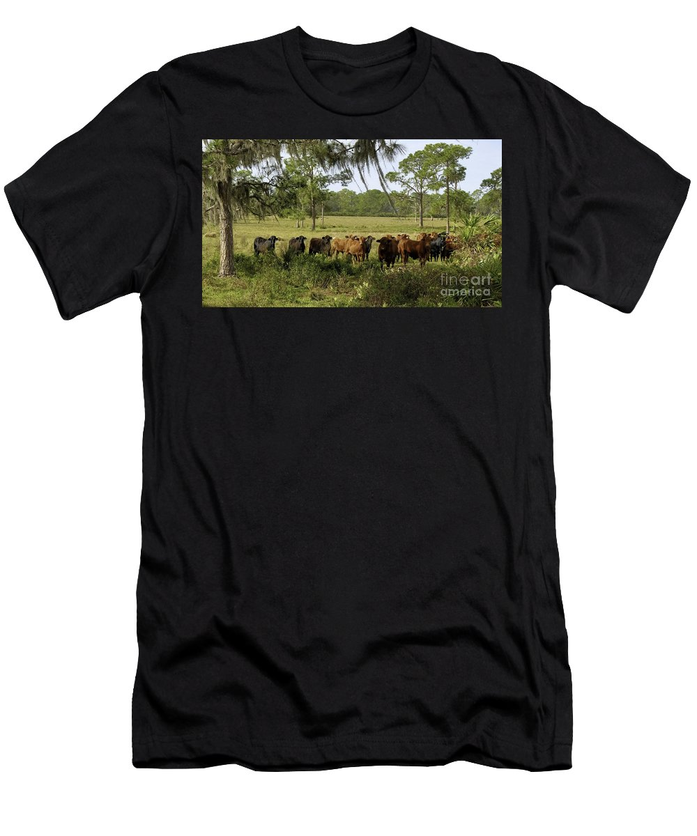 Florida Cracker Cows Men's T-Shirt (Athletic Fit) featuring the photograph Florida Cracker Cows #3 by Teresa A and Preston S Cole Photography