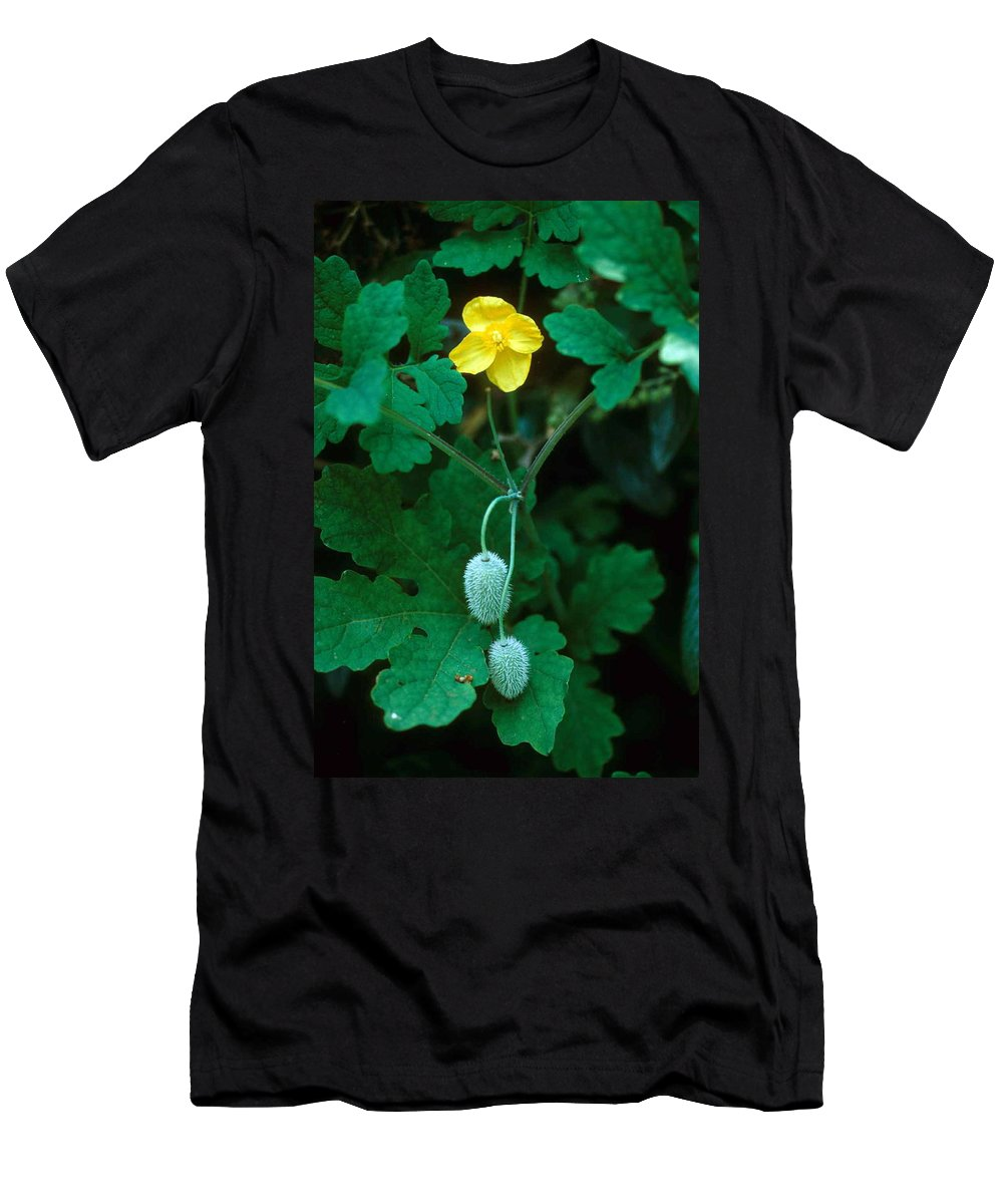 Flower Men's T-Shirt (Athletic Fit) featuring the photograph Flower And Fruit by Laurie Paci