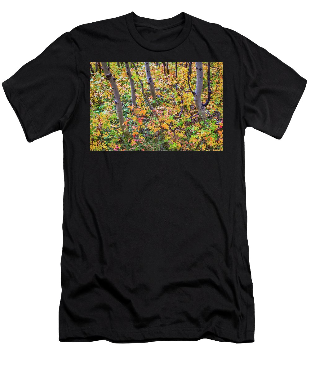 Colorado Men's T-Shirt (Athletic Fit) featuring the photograph Forest Colors by James BO Insogna