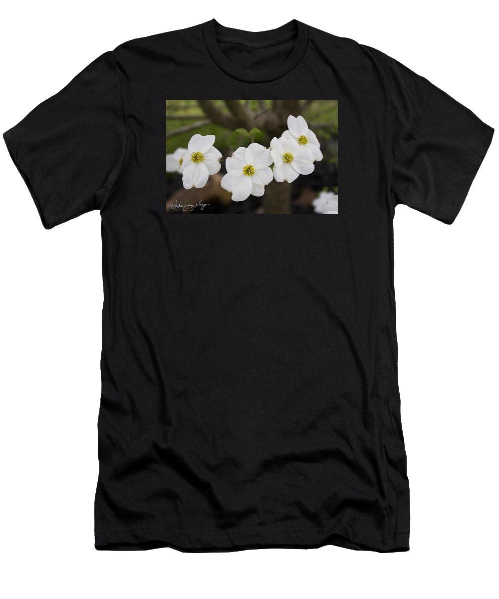 Dogwood Men's T-Shirt (Athletic Fit) featuring the photograph Four Dogwoods by Andrew Jay Mayon