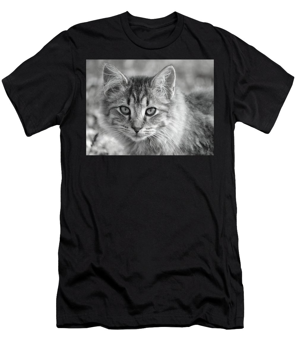 Cat Men's T-Shirt (Athletic Fit) featuring the photograph Friendly Farm Cat by Nicole Frederick