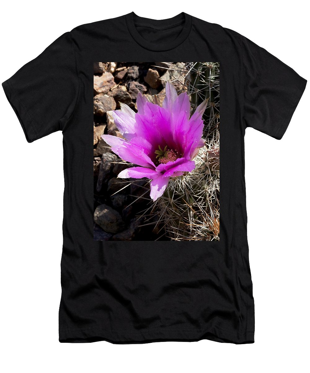 Cactus Men's T-Shirt (Athletic Fit) featuring the photograph Fuchsia Cactus Blossom by Phyllis Denton