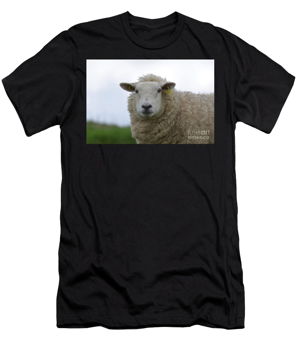 Sheep Men's T-Shirt (Athletic Fit) featuring the photograph Fuzzy White Sheep In A Remote Location by DejaVu Designs