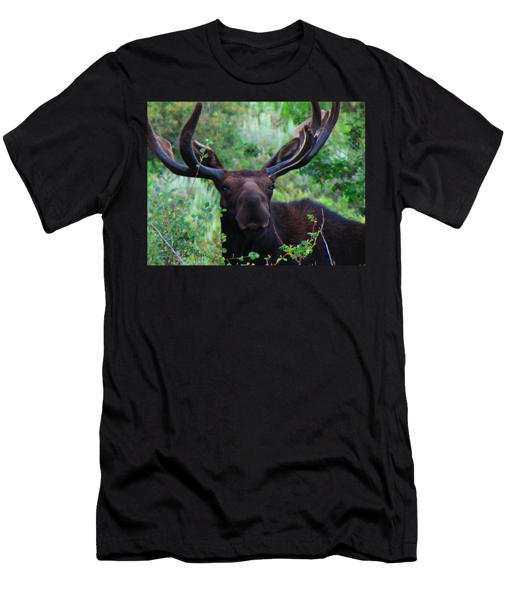 Moose Men's T-Shirt (Athletic Fit) featuring the photograph Gentle Soul by Carol Dyer