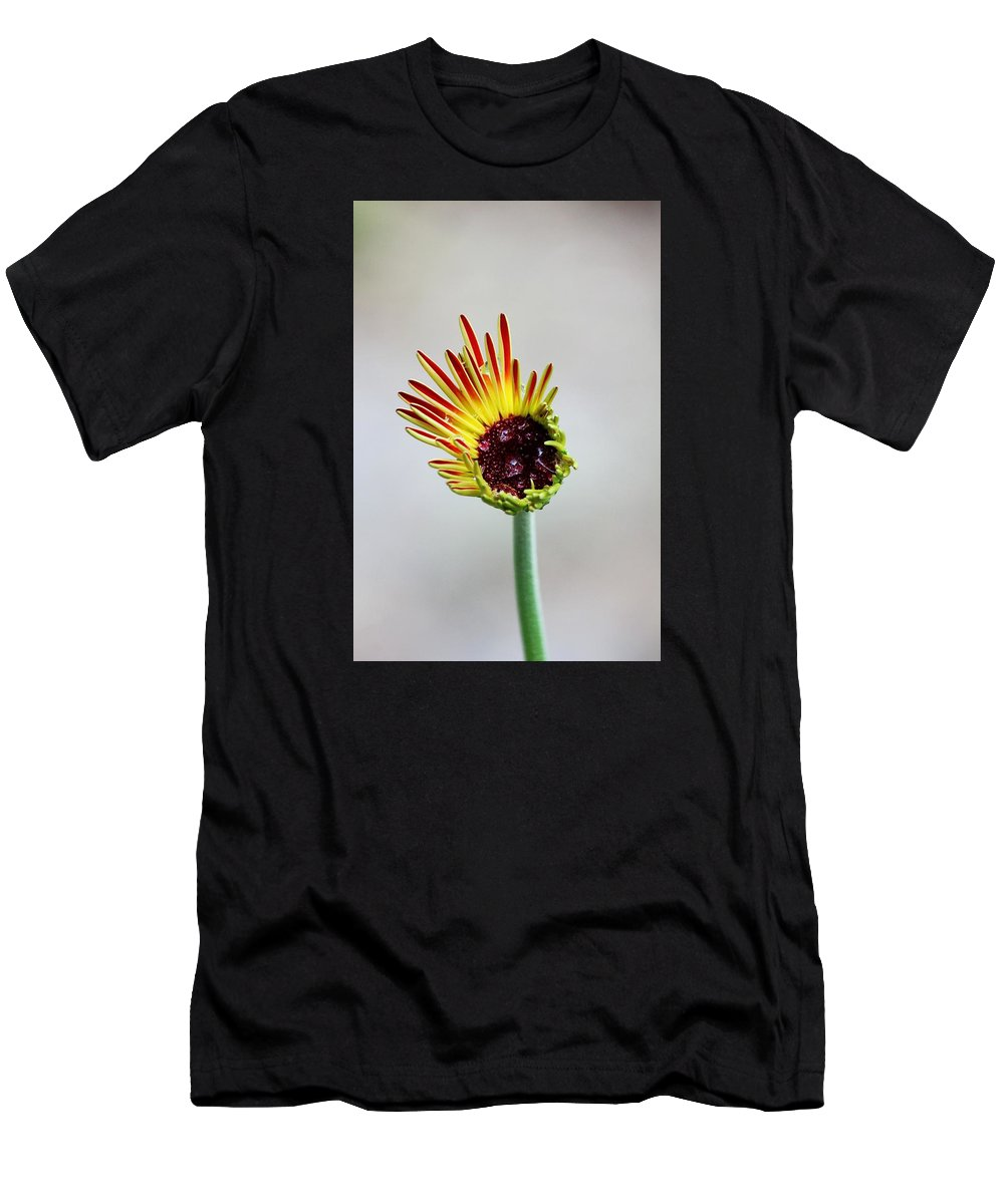 Flower Men's T-Shirt (Athletic Fit) featuring the photograph Gerbera Beginnings by Peggy Burley