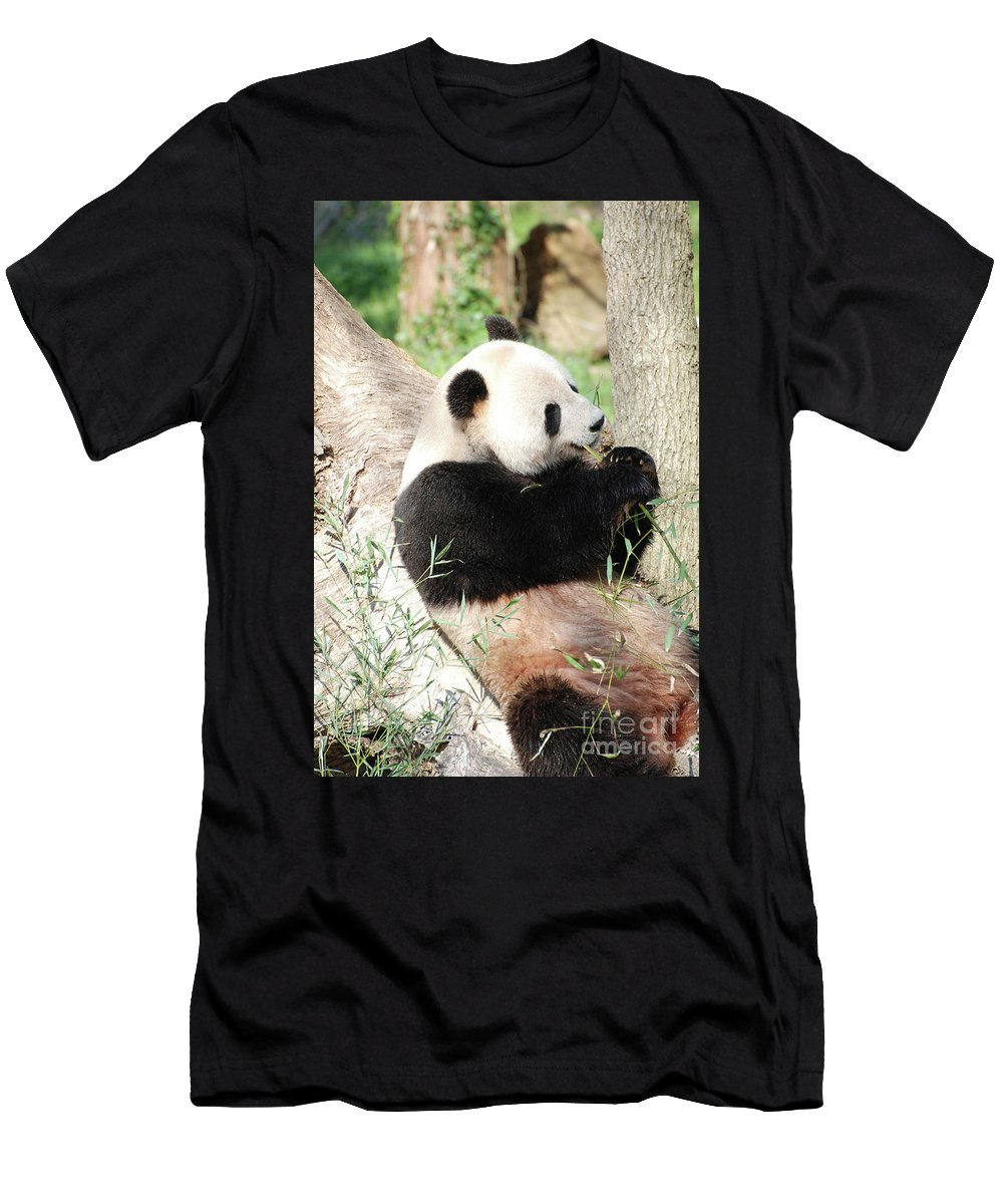 Panda Men's T-Shirt (Athletic Fit) featuring the photograph Giant Panda Bear Leaning Against A Tree Trunk Eating Bamboo by DejaVu Designs