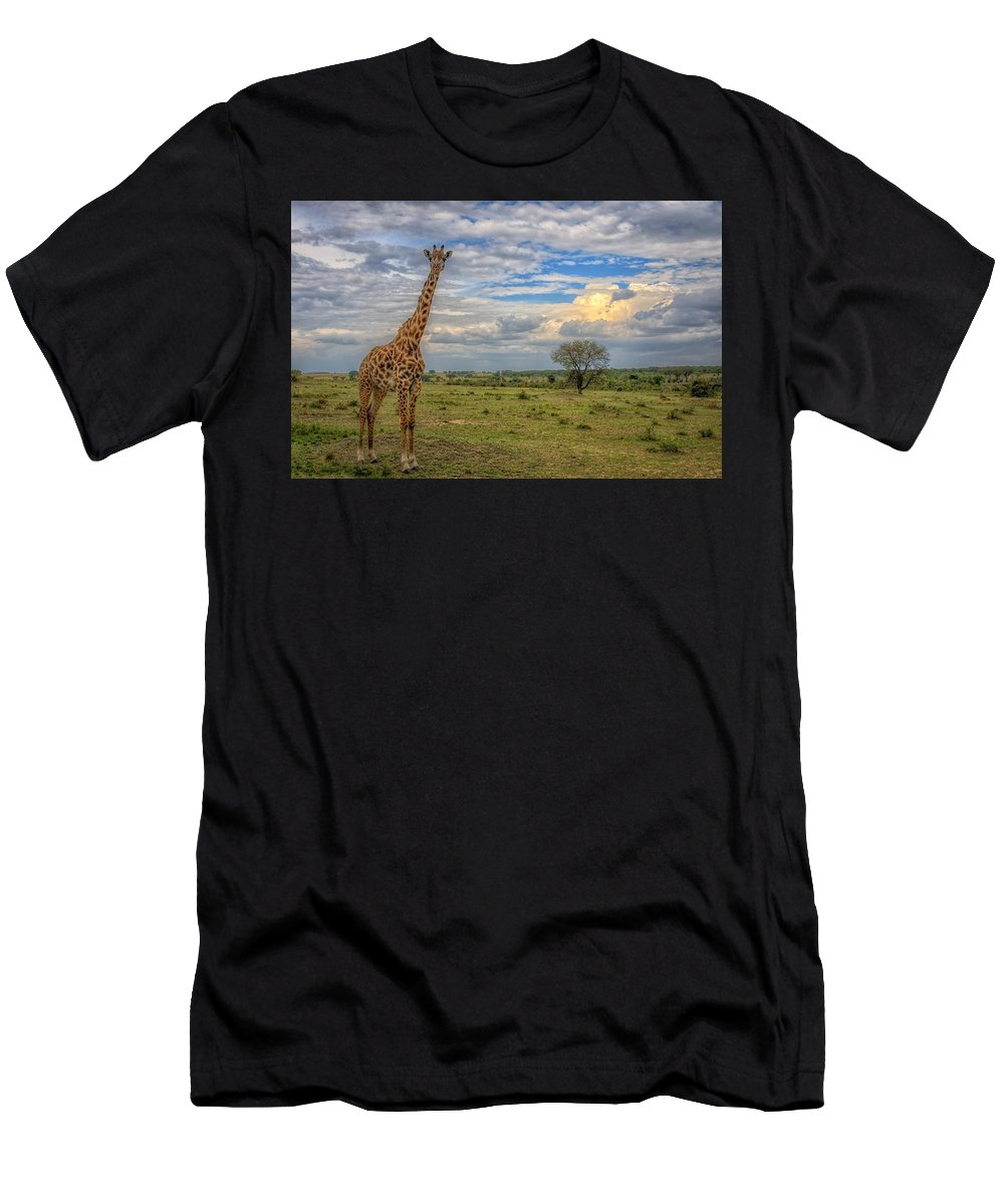 Giraffe Men's T-Shirt (Athletic Fit) featuring the digital art Giraffe by Dorothy Binder