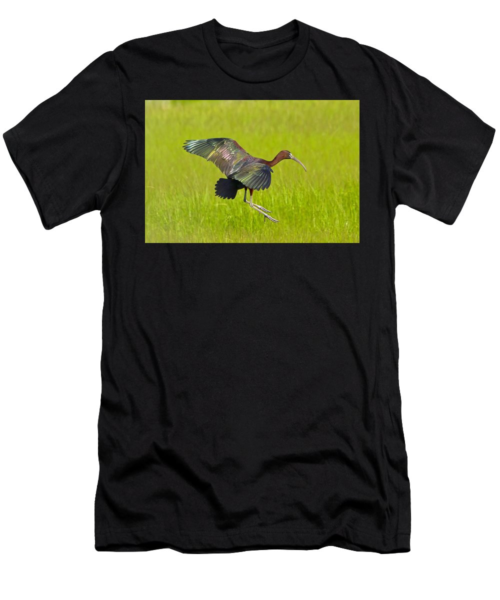 Glossy Ibis Men's T-Shirt (Athletic Fit) featuring the photograph Glossy Ibis by David Freuthal