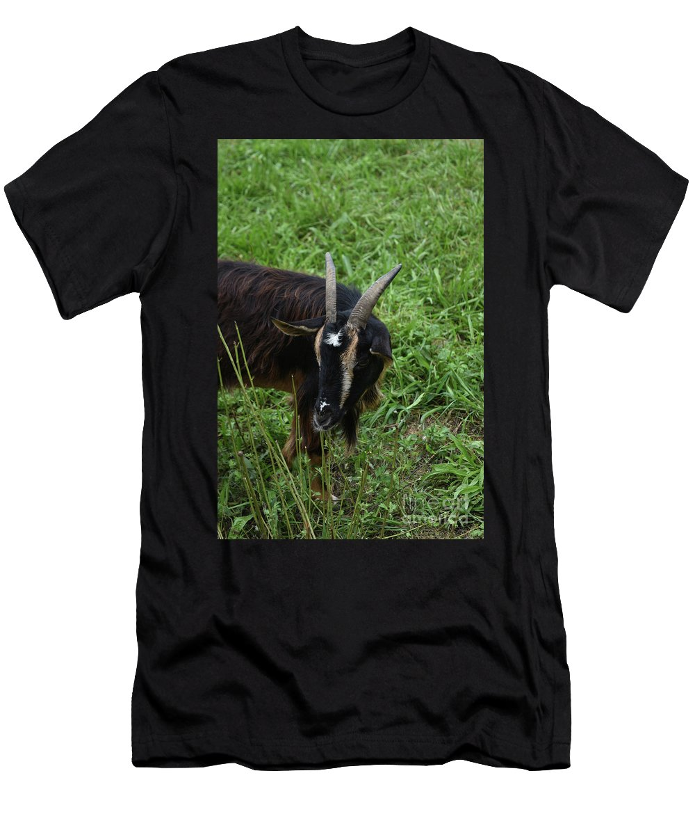 Goat Men's T-Shirt (Athletic Fit) featuring the photograph Goat With Long Horns In A Grass Field by DejaVu Designs