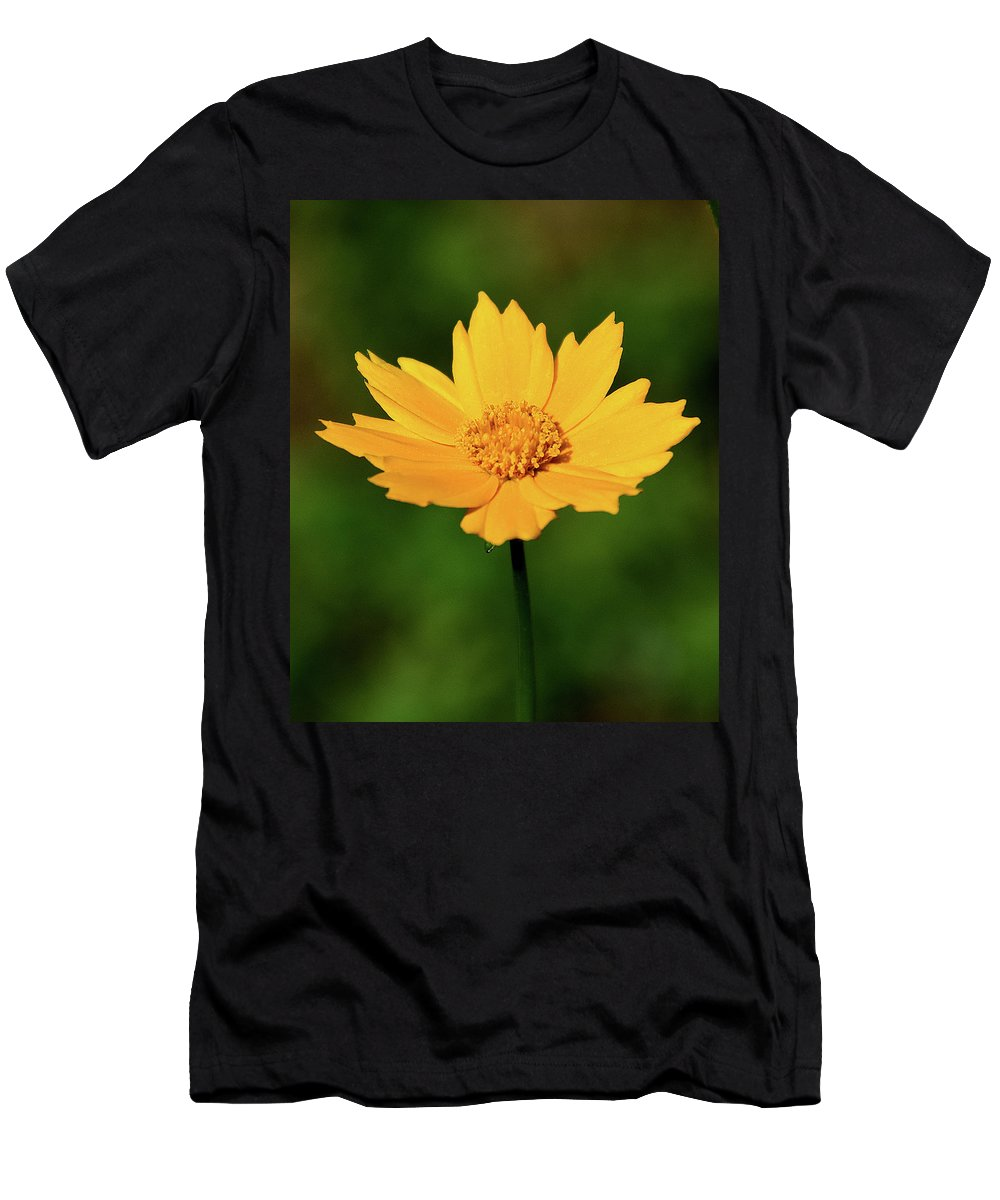 Ann Keisling Men's T-Shirt (Athletic Fit) featuring the photograph Gold In The Garden by Ann Keisling