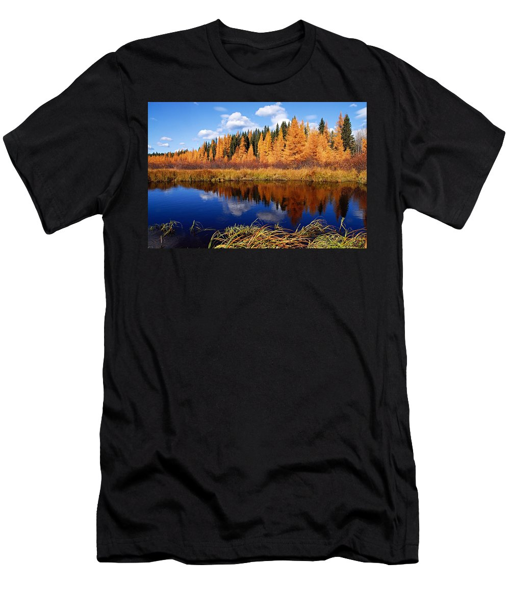 Spruce River Men's T-Shirt (Athletic Fit) featuring the photograph Golden Tamaracks Along The Spruce River by Larry Ricker