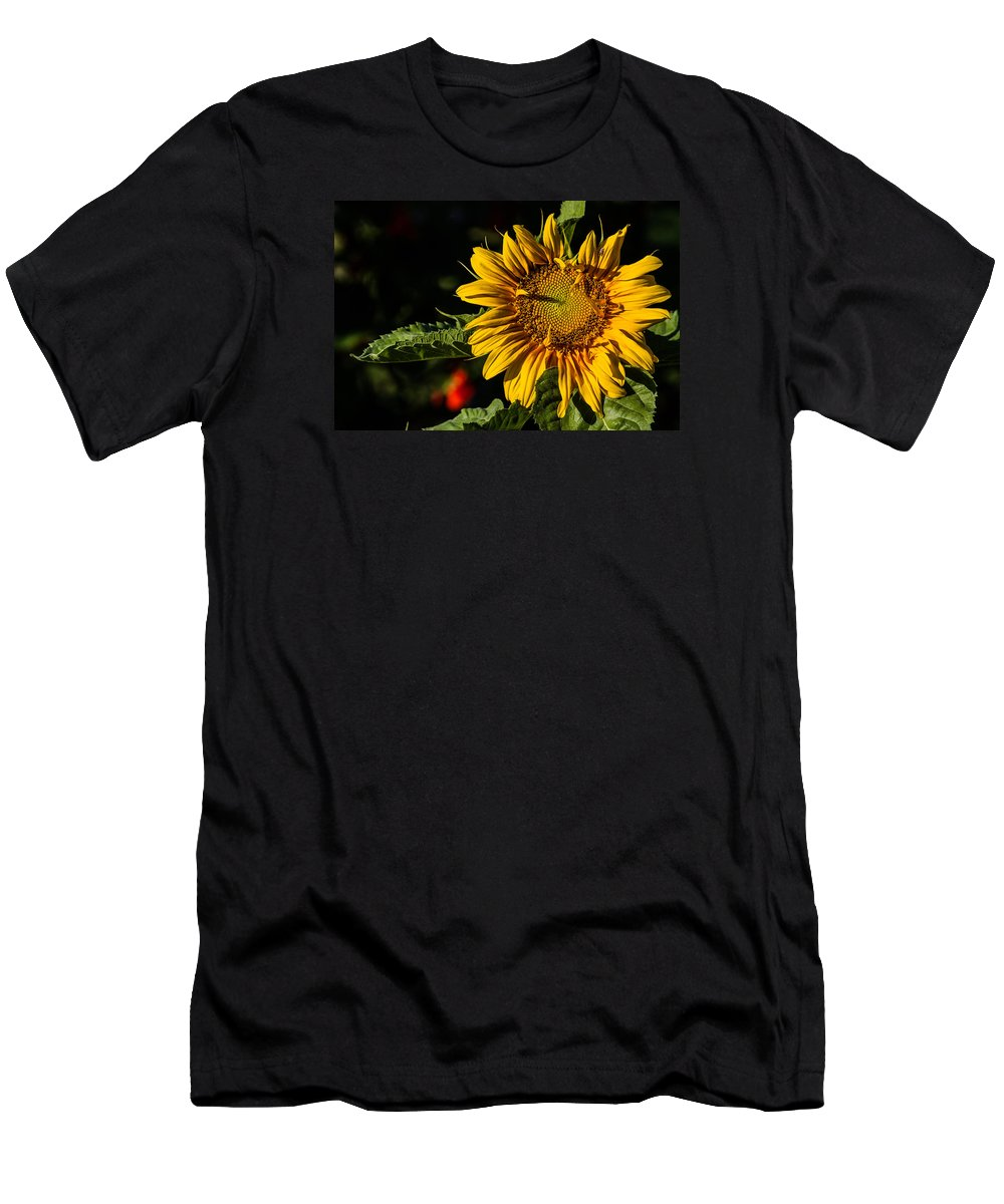 Sunflower T-Shirt featuring the photograph Good Morning by Alana Thrower