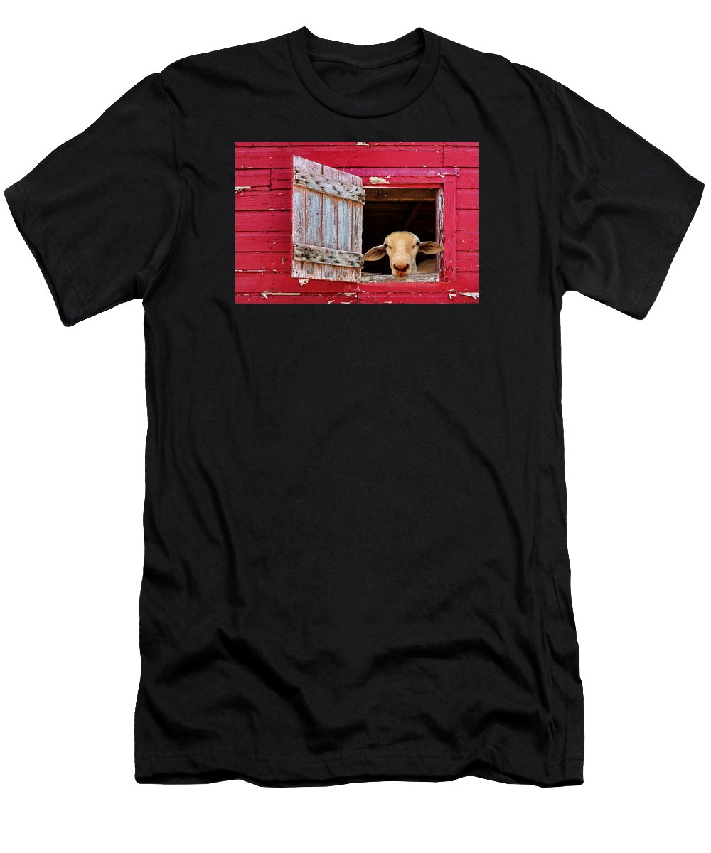 Farm Animals Men's T-Shirt (Athletic Fit) featuring the photograph Good Morning by Nikolyn McDonald
