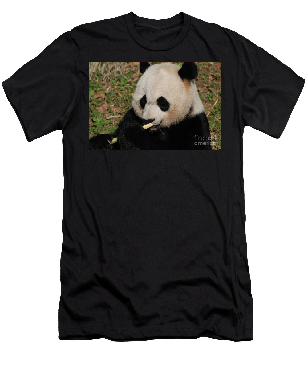 Panda Men's T-Shirt (Athletic Fit) featuring the photograph Gorgeous Face Of A Giant Panda Bear With Bamboo by DejaVu Designs