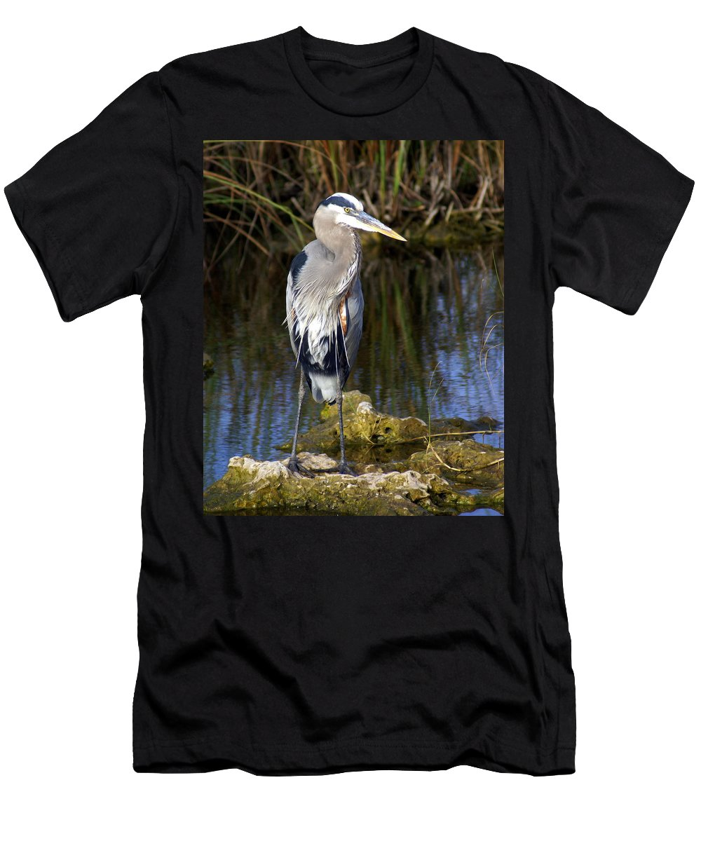 Great Blue Heron Men's T-Shirt (Athletic Fit) featuring the photograph Great Blue by Marty Koch
