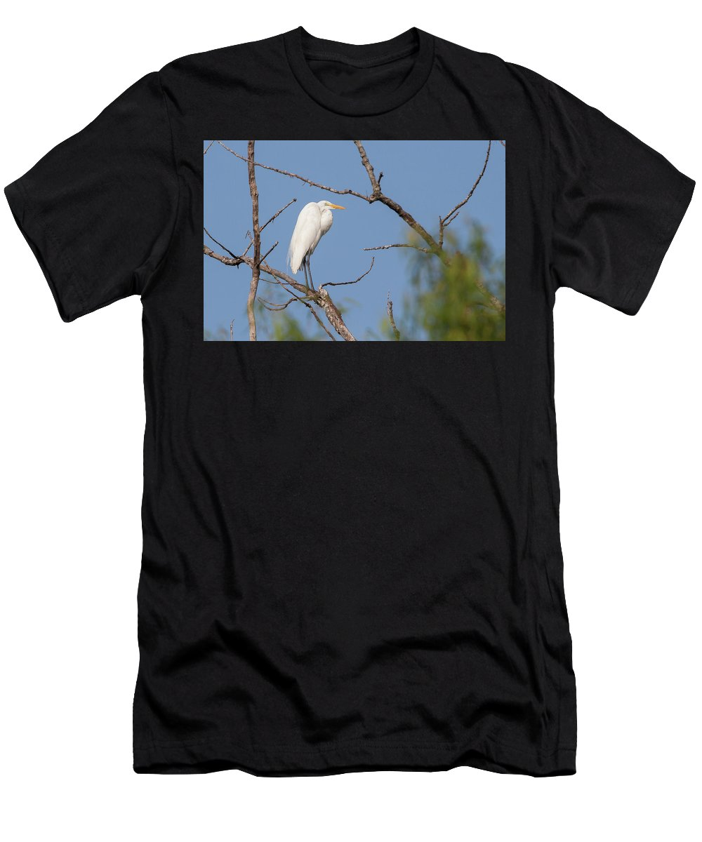 Ronnie Maum Men's T-Shirt (Athletic Fit) featuring the photograph Great Egret In Tree by Ronnie Maum
