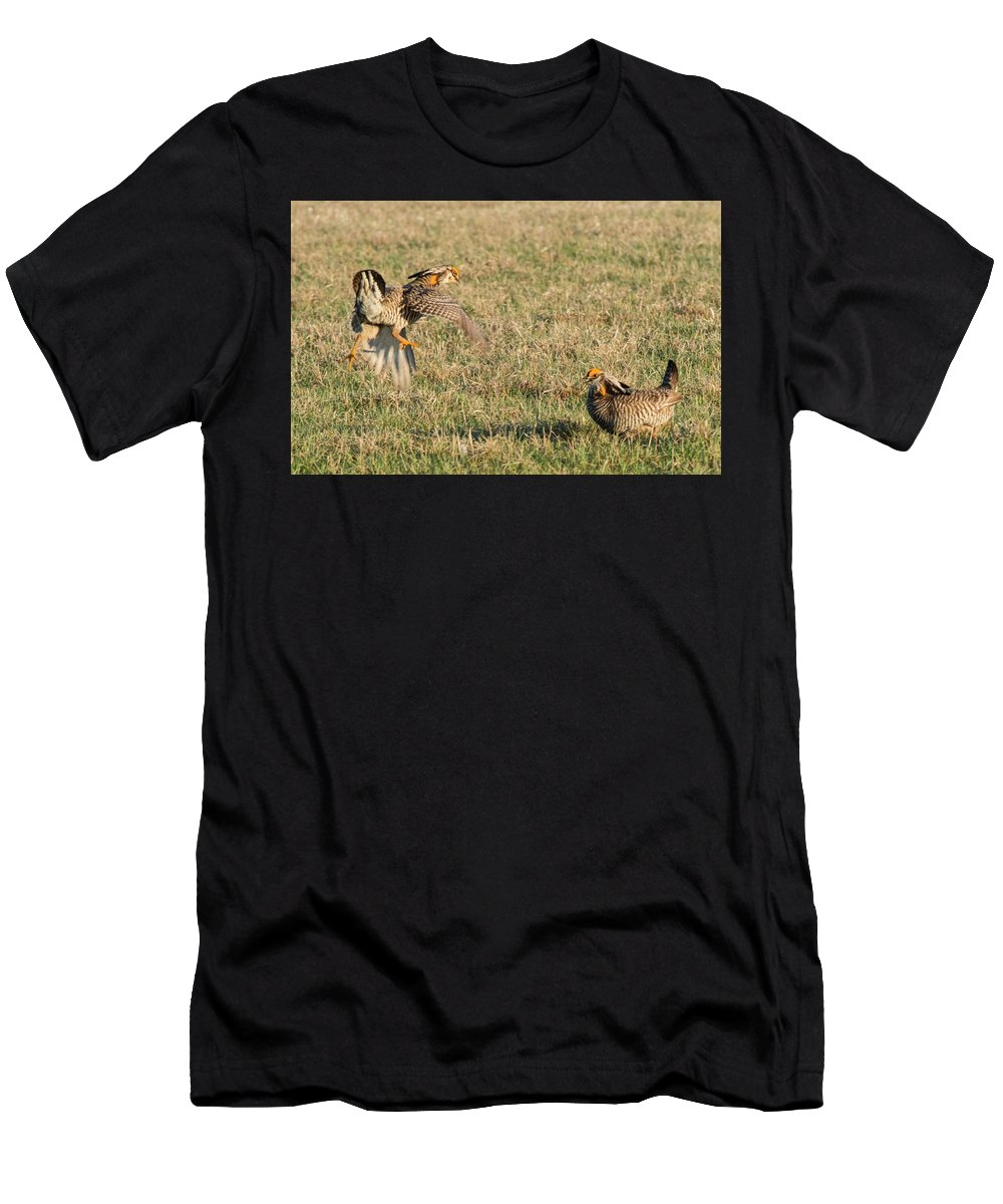 Greater Prairie Chicken Men's T-Shirt (Athletic Fit) featuring the photograph Greater Prairie Chicken Males 2 by David Drew