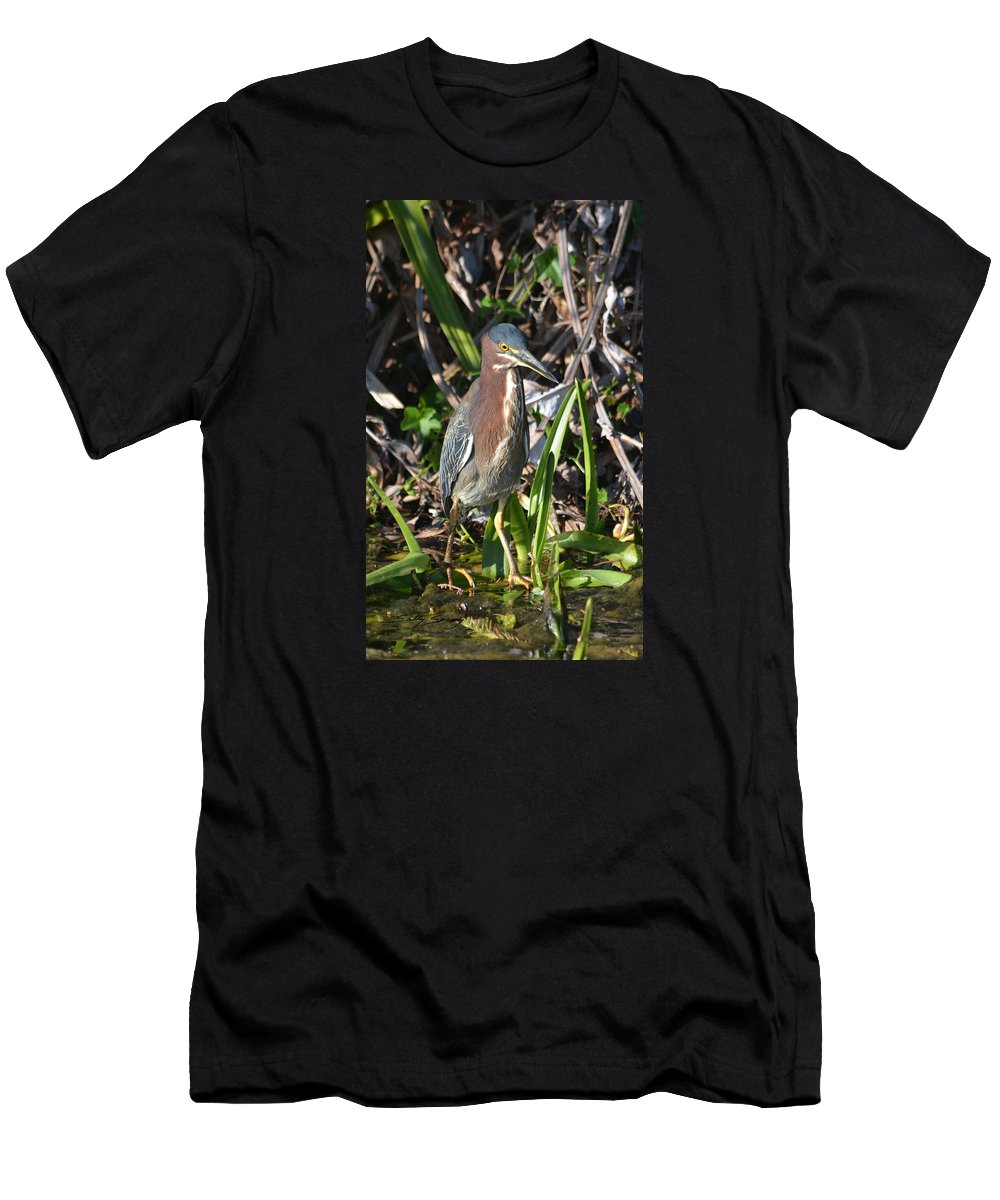 Green Heron Men's T-Shirt (Athletic Fit) featuring the pyrography Green Heron Everglades by Sally Sperry
