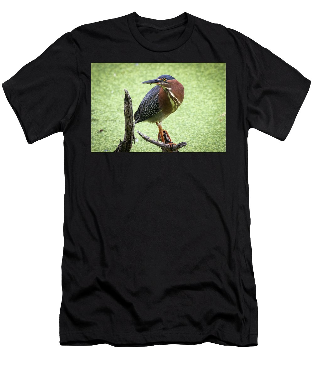 Green Men's T-Shirt (Athletic Fit) featuring the photograph Green Heron by Soroush Mostafanejad
