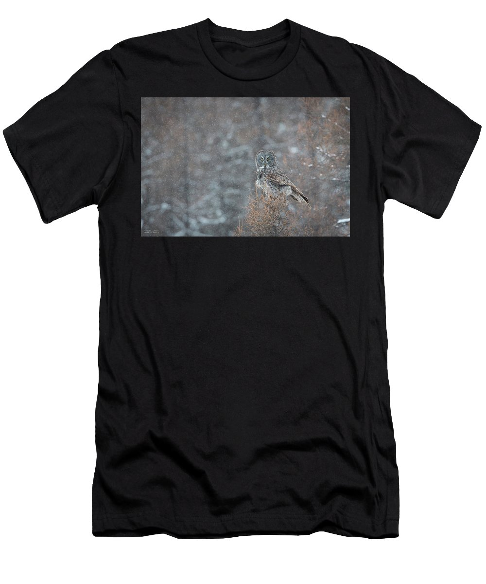 Avian Men's T-Shirt (Athletic Fit) featuring the photograph Grey In Snow by Robert L Moffat