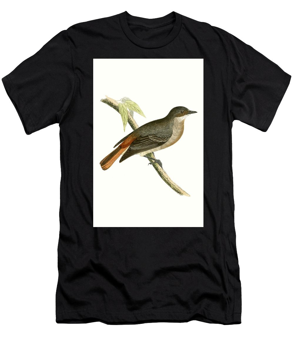 Bird Men's T-Shirt (Athletic Fit) featuring the painting Grey Redstart by English School