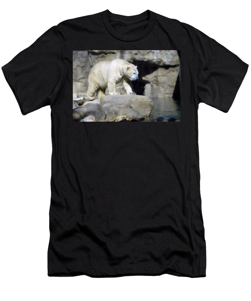 Memphis Zoo Men's T-Shirt (Athletic Fit) featuring the photograph Habitat - Memphis Zoo by D'Arcy Evans