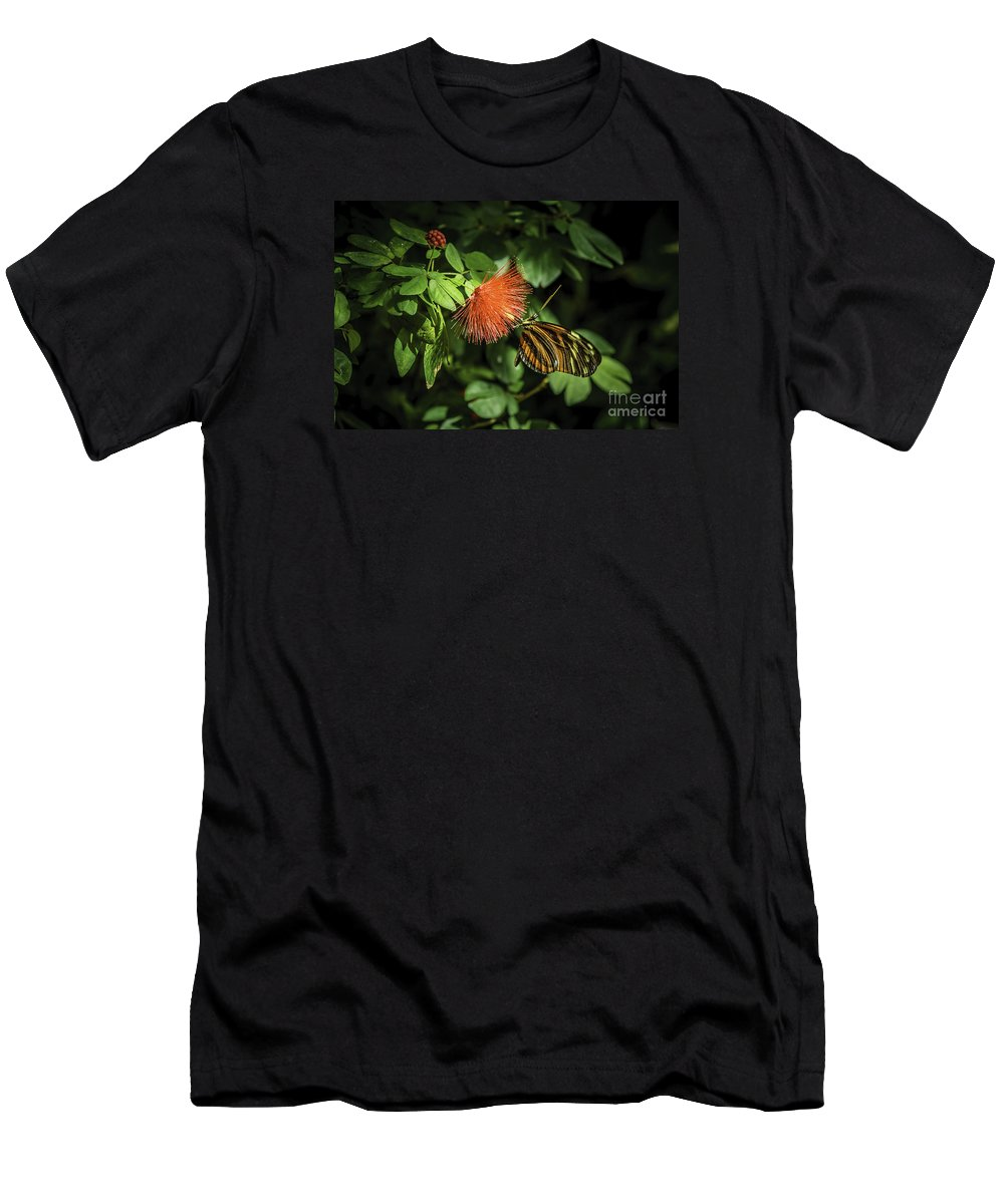 Butterfly Men's T-Shirt (Athletic Fit) featuring the photograph Hangin' On by Joseph Yvon Cote